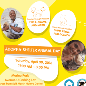 Adopt a shelter animal preview
