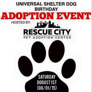 shelter dog bday event