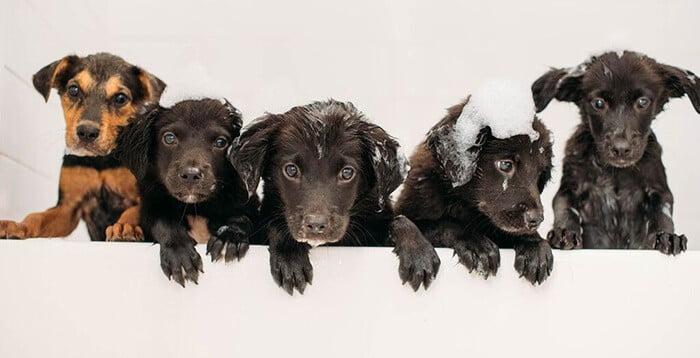 Adopt A Pet In Brooklyn Rescue City